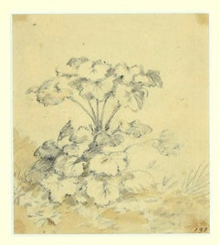 Garden's Flowers - Ink and Watercolor Drawing by Jan Pieter Verdussen - 1750s