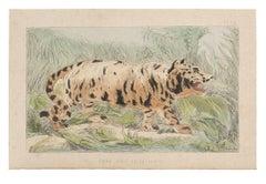 The Tiger - Original Lithograph by Emile Henri Laporte - 1860