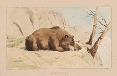 The Bear - Original Lithograph on Paper by E. Laport - 1860