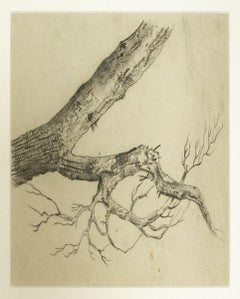 Tree - Pencil Drawing - Early 20th Century