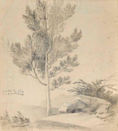 Sole Tree - Original Pencil on Paper - 1817