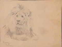 Lion - Original Drawing by Wilhelm Lorenz - 1932