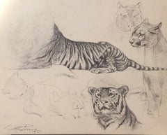 Study of Tiger and Lioness - Original Drawing by Wilhelm Lorenz - 1958