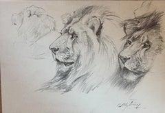 Lion - Original Pencil by Wilhelm Lorenz - Mid-20th Century