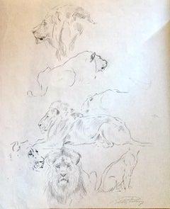 Study of Lion - Original Pencil by Wilhelm Lorenz - Mid-20th Century