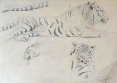 Study of Tiger - Original Pencil by Wilhelm Lorenz - Mid-20th Century