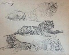Tiger at eRst - Original Pencil by Wilhelm Lorenz - Mid-20th Century