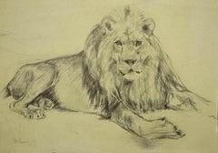 Lion - Original Pencil Drawing on Paper - 1940s