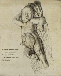 Anatomy of the Child - De Humani Corporis Fabrica - by Andrea Vesalio - 1642