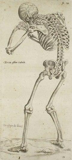 """The Skeleton - from """"De Humani Corporis Fabrica"""" Tav. 6 - 1642"""