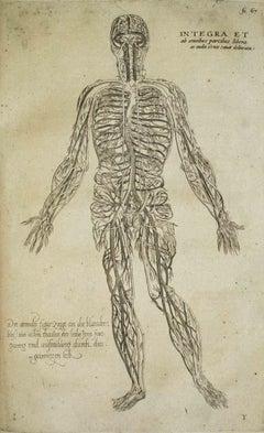 The Circulatory System -  De Humani Corporis Fabrica - by Andrea Vesalio - 1642
