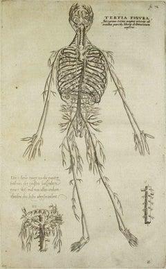 The Human Skeleton-  De Humani Corporis Fabrica - by Andrea Vesalio - 1642