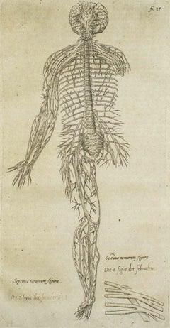 "The Circulatory System - From ""De Humani Corporis Fabrica by A. Vesalio - 1642"