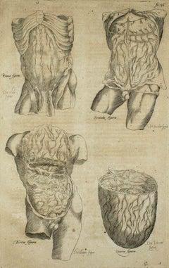 The Human Body -  De Humani Corporis Fabrica - by Andrea Vesalio - 1642