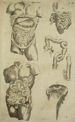 The Digestive System - De Humani Corporis Fabrica - by Andrea Vesalio - 1642