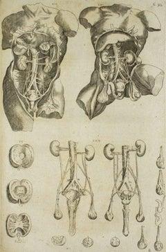 "The Internal Organs -  From ""De Humani Corporis Fabrica"" - by A. Vesalio - 1642"