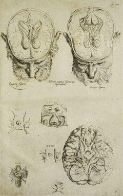 The Brain - From De Humani Corporis Fabrica - by Andrea Vesalio - 1642