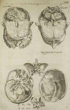 The Brain - De Humani Corporis Fabrica Tav. 42 - Original Etching - 1642