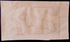 Study of lion - Original Pencil Drawing by Wilhelm Lorenz - 1933
