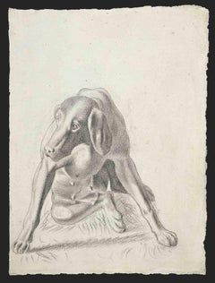 Portrait of Dog - Original Pencil Drawing - 1950