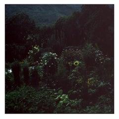 Backyard - Contemporary, Polaroid, Photograph, Landscape, 21st Century, Color