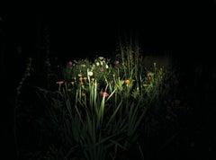 Night Garden - Contemporary, Landscape, 21st Century, Color, Night