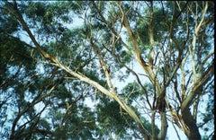 Cape Otway, South Australia