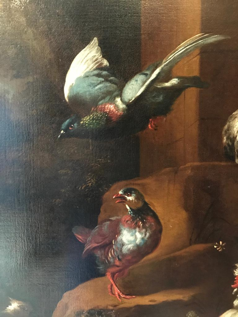 Beautiful 17th Century Dutch Oil Painting - An Assembly of Birds For Sale 1
