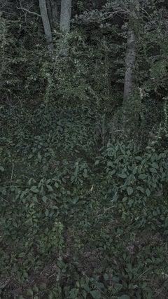 Foresta-Stella #2-2
