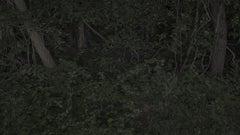 Foresta-Stella #1-2