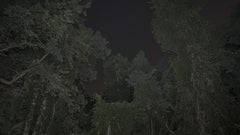 Foresta-Stella #1-1