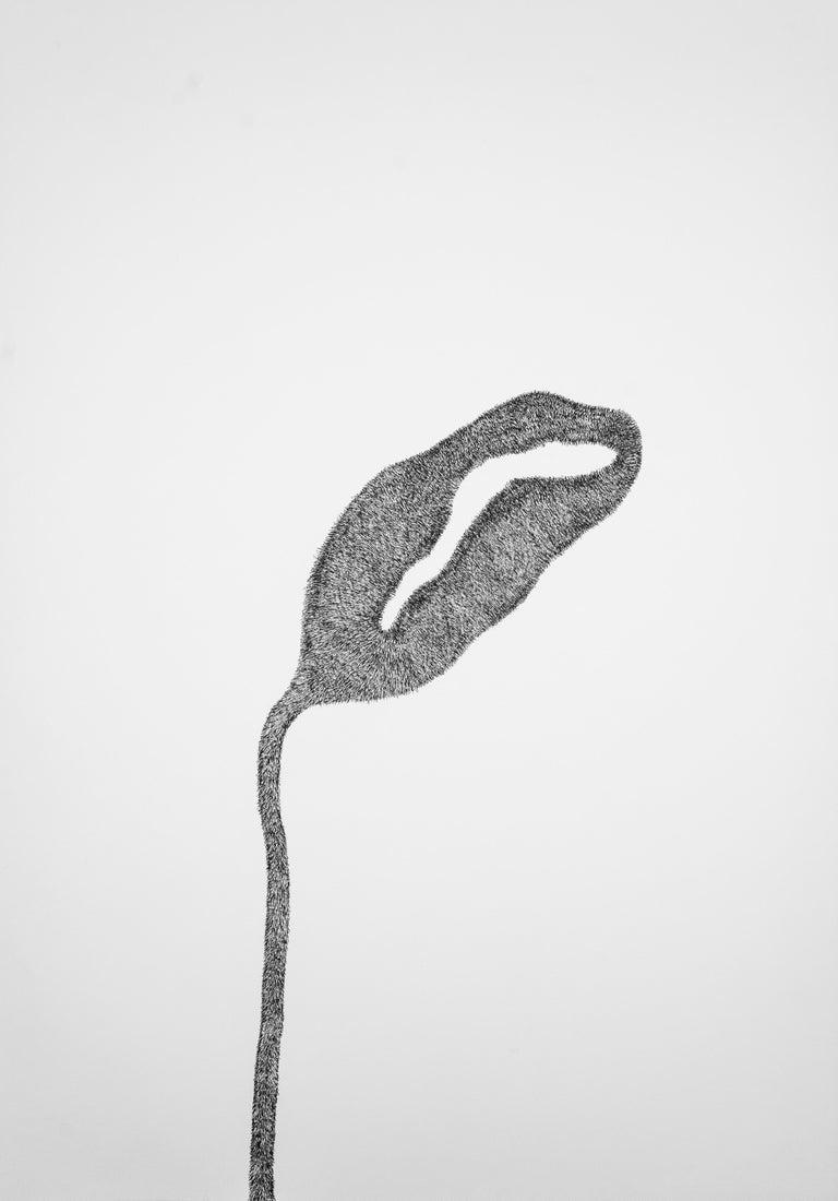 Alina Aldea Still-Life - Secret Garden 1 - Contemporary, Flower, White, Black, Drawing, 21st Century