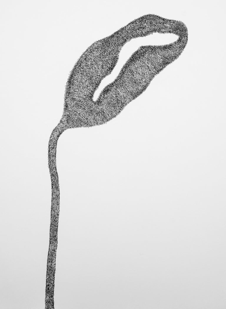 Secret Garden 1 - Contemporary, Flower, White, Black, Drawing, 21st Century - Art by Alina Aldea