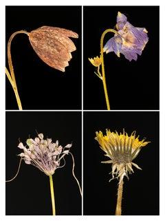 Snakes Head IV - Botanical Color Photography Prints
