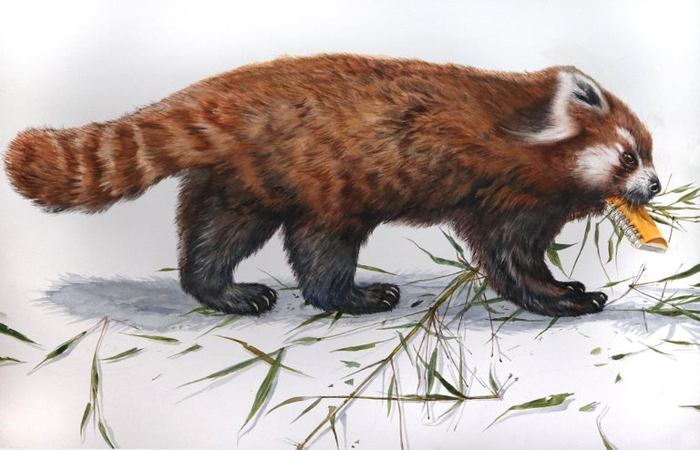"Thomas Broadbent Animal Painting - ""Red Panda"" Contemporary Watercolor on Paper"