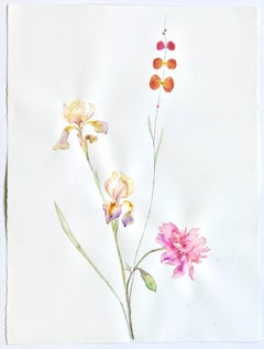 Cord Drawings and Watercolour Paintings