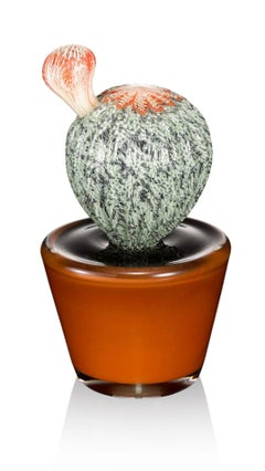 Potted Sonoran 1