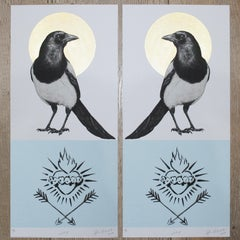 JOY - Magpie Male/Male
