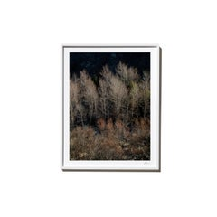 Forward, 2017, from the Survivors series (Framed Color Landscape Photography)