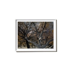 Noir, 2017, from the Survivors series (Framed Color Landscape Photography)