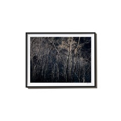 Strand, 2017, from the Survivors series (Framed Color Landscape Photography)