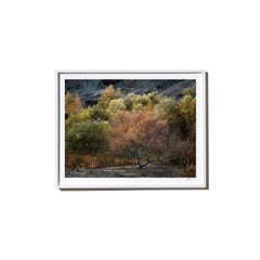 Yes and No, 2017, from the Survivors series (Framed Color Landscape Photography)