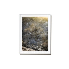 Dawn, 2017, from the Survivors series (Framed Color Landscape Photography)