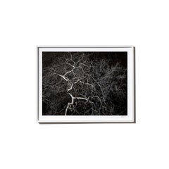 Electric, 2017, from the Survivors series (Framed Color Landscape Photography)