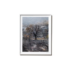 Farther, 2017, from the Survivors series (Framed Color Landscape Photography)