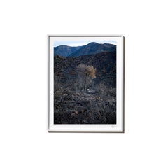 Impossible, 2017, from the Survivors series (Framed Color Landscape Photography)