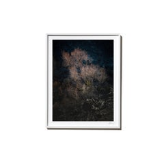 Rose, 2017, from the Survivors series (Framed Color Landscape Photography)