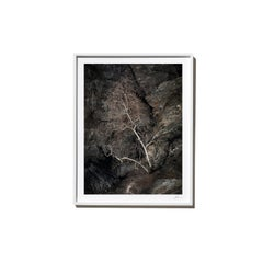 Standout, 2017, from the Survivors series (Framed Color Landscape Photography)
