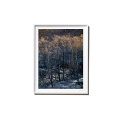 Twins, 2017, from the Survivors series (Framed Color Landscape Photography)