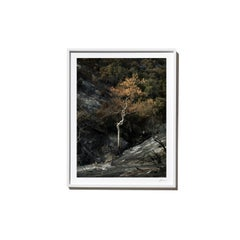 White, 2017, from the Survivors series (Framed Color Landscape Photography)